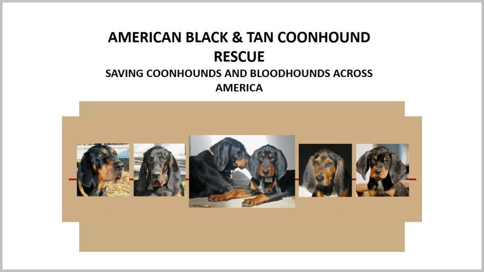 American Black & Tan Coonhound Rescue