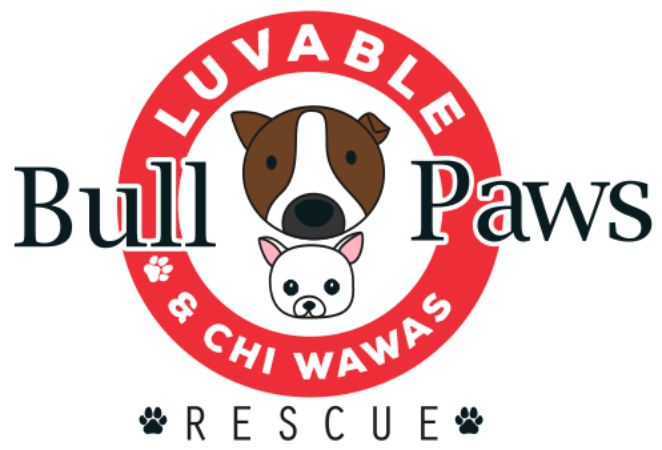 Bull luv able Paws and Chi Wawas Rescue