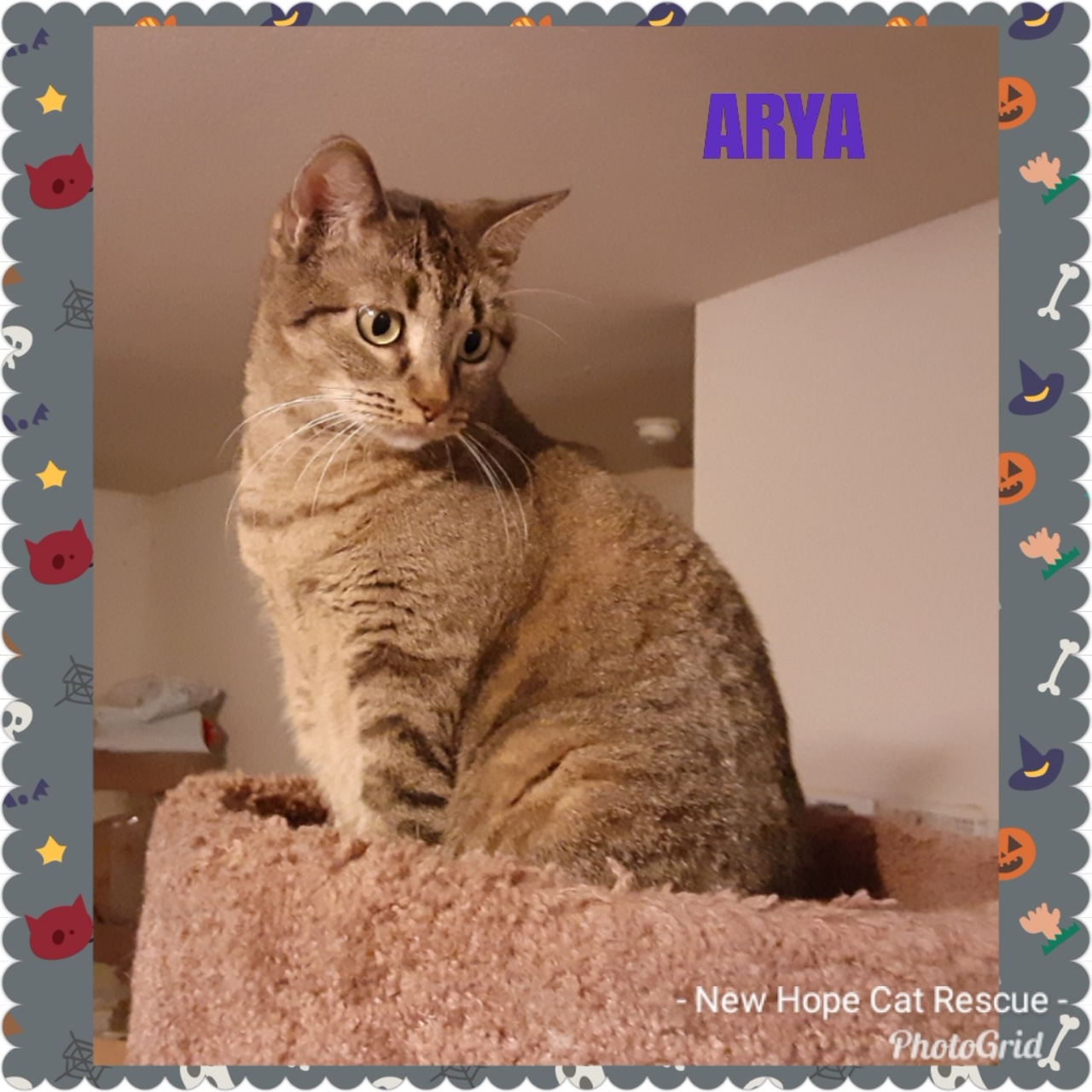 Arya - New Hope Cat Rescue