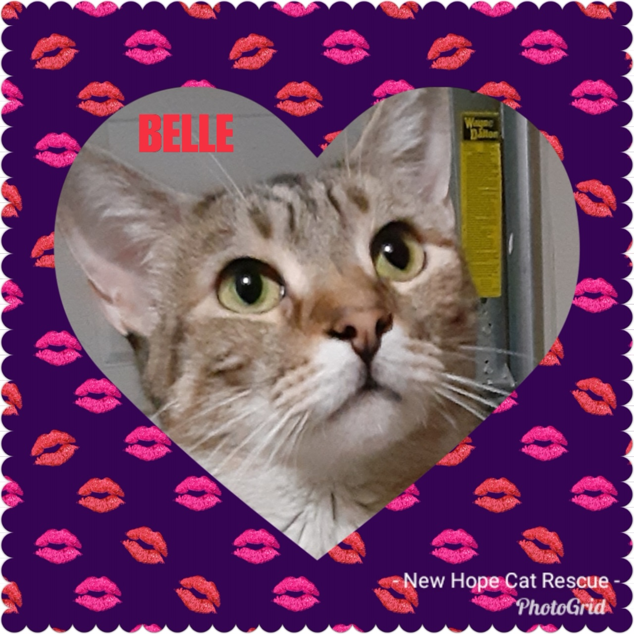 Belle - New Hope Cat Rescue